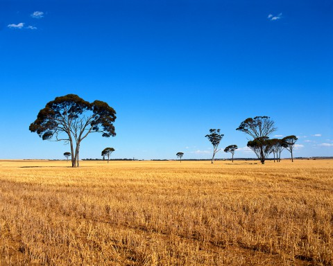 Blue Sky and Countryside Near Perth