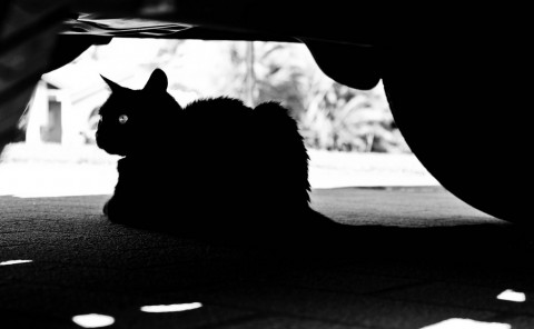 photo credit: Shadow Cat via photopin (license)