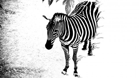 photo credit: Zebra Unraveling via photopin (license)