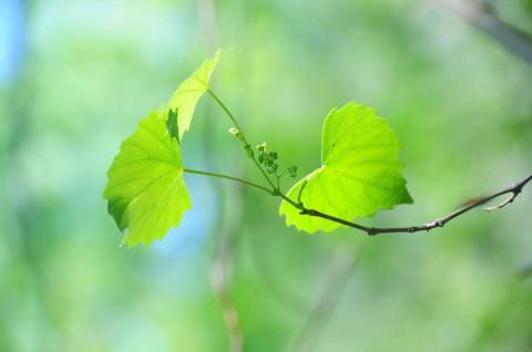 photo credit: Green leaf via photopin (license)