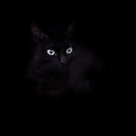 photo credit: Black Billie via photopin (license)