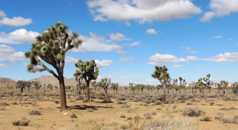 photo credit: Joshua Tree via photopin (license)