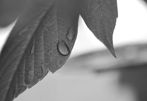 photo credit: Maple Rain 1 via photopin (license)