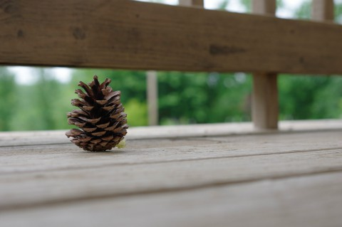 photo credit: pine cone via photopin (license)