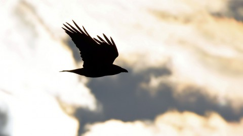 photo credit: Flight Of The Raven via photopin (license)