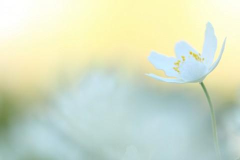 photo credit: Spring white 8 via photopin (license)