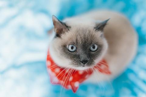photo credit: Alexander Rentsch Phini the cat #II via photopin (license)