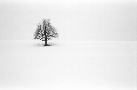 photo credit: Ric Capucho Hütten - Ilford Delta 400 film via photopin (license)