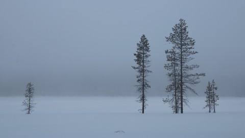 photo credit: Markus Trienke Misty Morning via photopin (license)