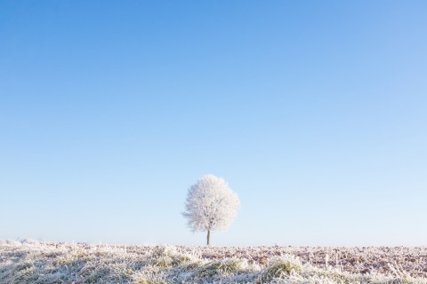 photo credit: Éole Another frozen year via photopin (license)