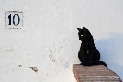 photo credit: Álvarez Bonilla Gato negro - Black cat - Gatto nero via photopin (license)