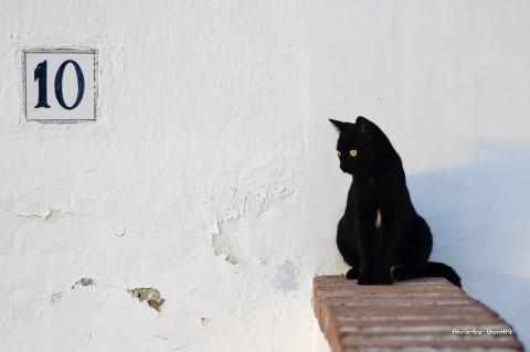 photo credit: Álvarez Bonilla Gato negro - Black cat - Gatto nero via photopin (license)