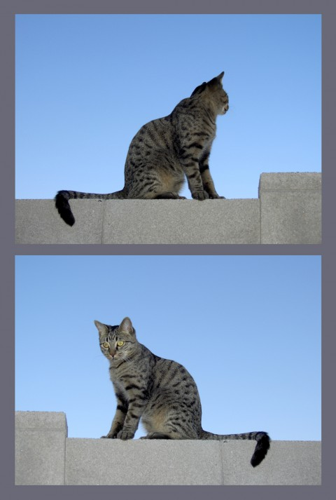 photo credit: cobalt123 Hurry, Diptych via photopin (license)